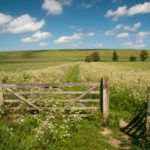 Wiltshire Walks